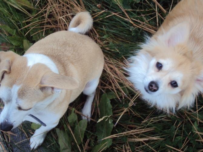 Dog Food Advisor's Dog Food Recall Alert
